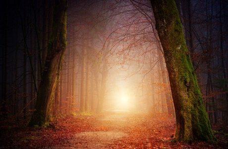 לצאת אל האור* לעורר השראה